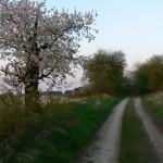 Pflaumenweg